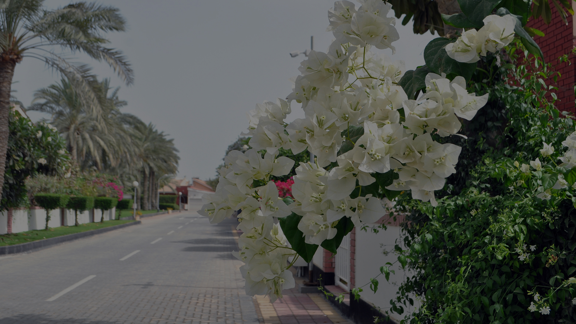 Beautiful White Flowers sprouting alongside a Brick Street